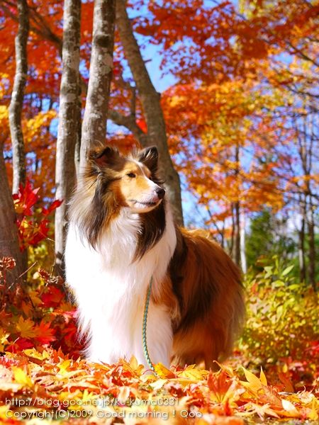 I like how the picture has the dog almost look candid, the dogs pose doesnt look set up. The contrast between the leaves and the dogs white fur makes the dog stand out.