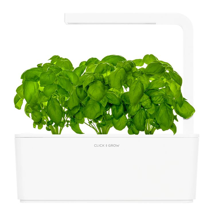 Smart Herb Garden with white lid growing basil