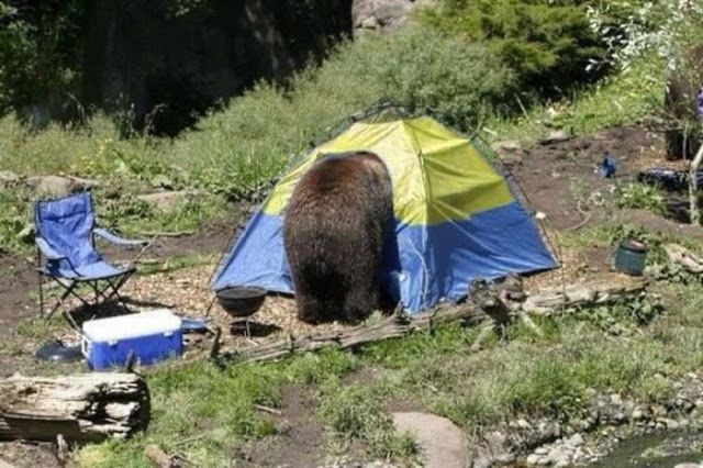Funny photos of travelers and outdoor activity lovers