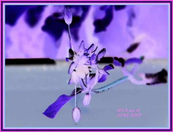 gratefulness to spirit of nature by Heli Aarniranta on ARTwanted