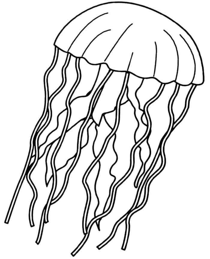 Free Coloring Pages For Adults Jellyfish Fish Coloring Page Coloring Pages Inspirational Abstract Coloring Pages