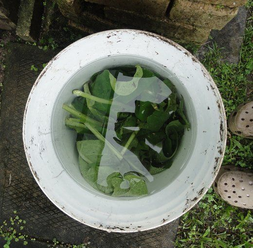 Homemade Fertilizer From Vegetable Scraps: 1000+ Images About Fertilizer