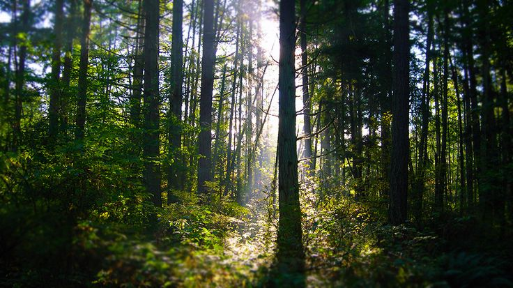 Discover the animal and plant life around the natural areas and trails at Sunnyside Acres Urban Forest in South Surrey.