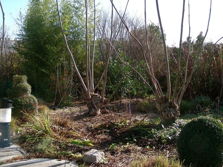 Les 97 meilleures images propos de gilles cl ment for Jardins de jardiniers