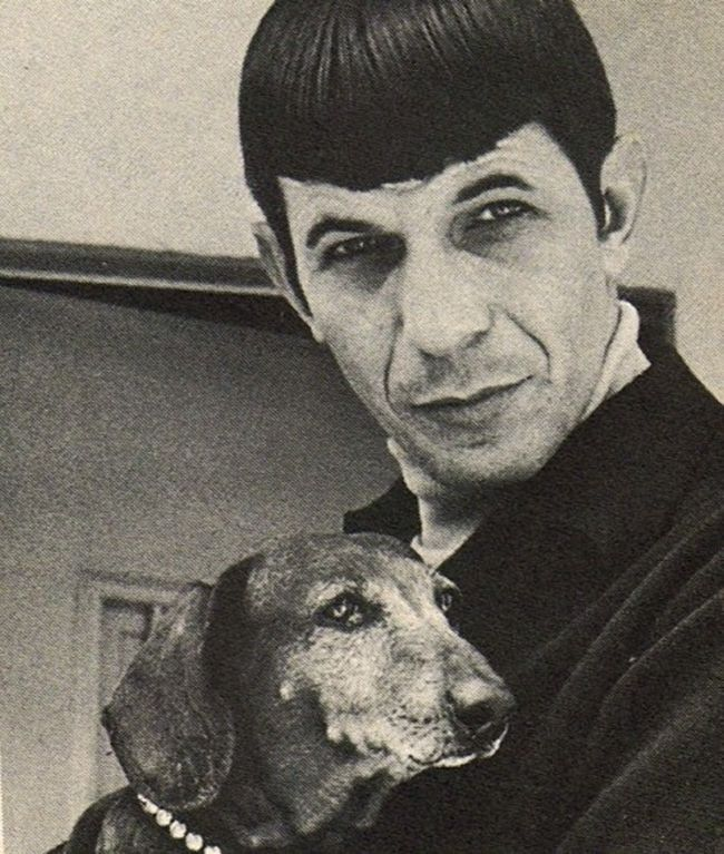 famous people with their daschounds | Puppy Love: Spock Loves Dachshunds | The Pet Collective