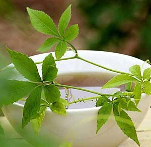 Jiaogulan rostlina která propujčuje nesmrtelnost