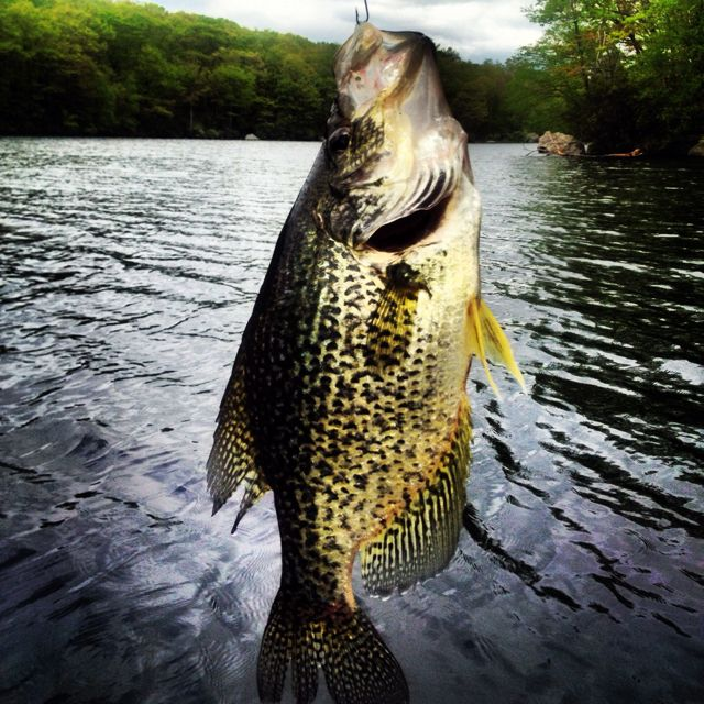76 best getyourthumpon images on pinterest fishing for Bon tempe lake fishing