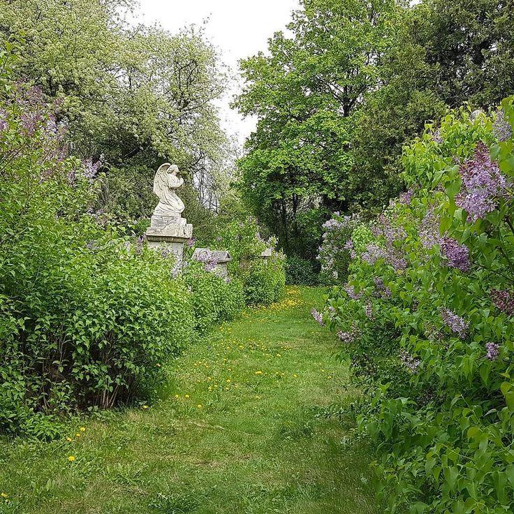 Cmentarz św. Marka. Właśnie jest powódź bzu. Oszałamiający zapach.  #stmarx #friedhof #Vienna #Wien #austria #visitaustria #visitvienna