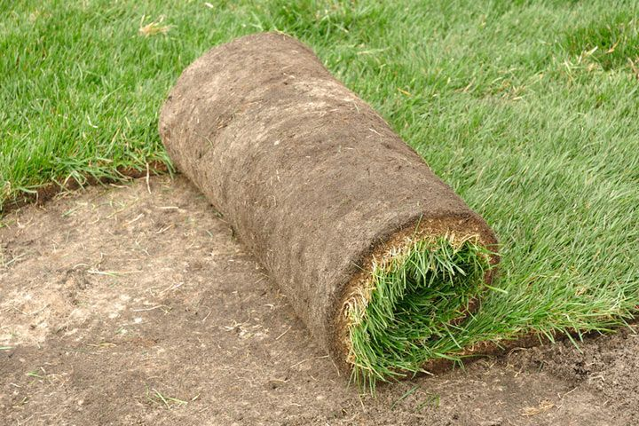 Instantly renew your lawn by laying sod. Lay sod in spring where cool-season grasses rule and any time of year where warm-season turf is king.