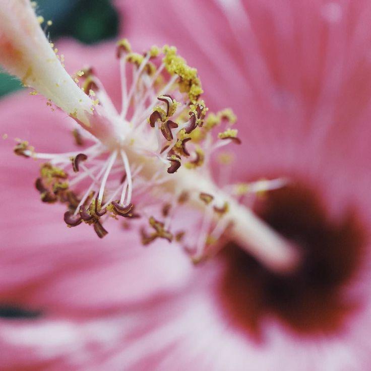 Ça prenais bien mon iphone pour commencer à faire des photos de fleurs... #flower #vscocam #momentlens