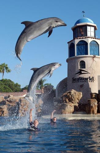 Sea World ....except that some members of my family are terrified of most sea life.  I can pin the dolphins; they're safe. : )
