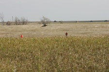 U-Guide South Dakota Pheasant Hunting