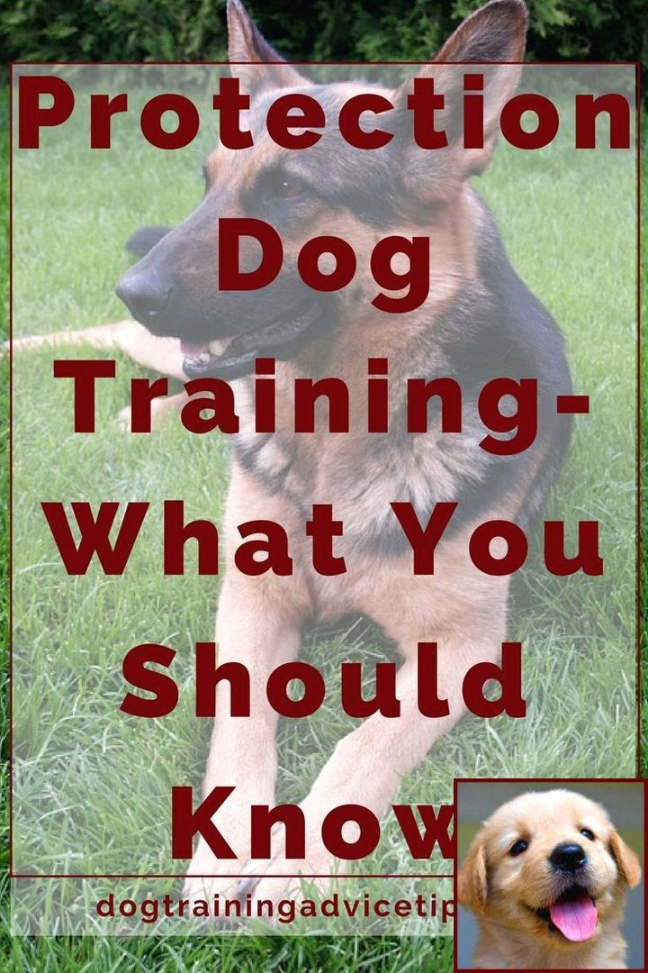 Pin On Dog Behavior Problems