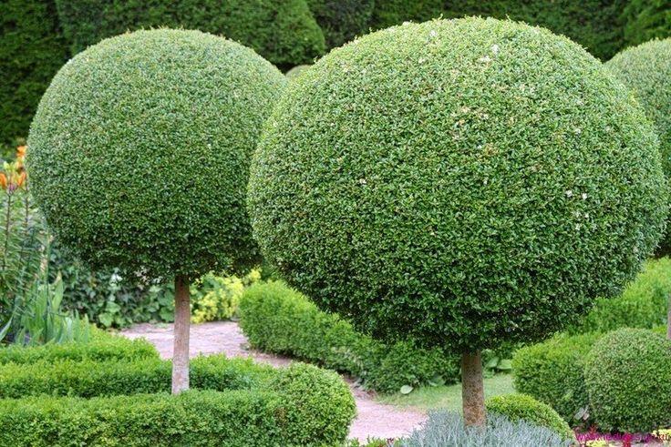 Стрижка растений, профессиональный уход за садом в Москве и области.