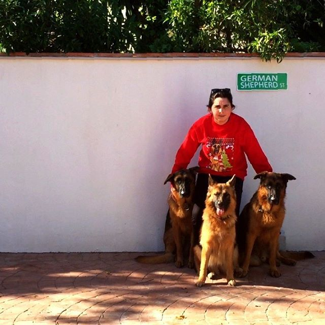 Shout out from three German Shepherds and Courtney @pawsomefour wearing awesome Christmas sweater !  Jingle barf all the way !!
