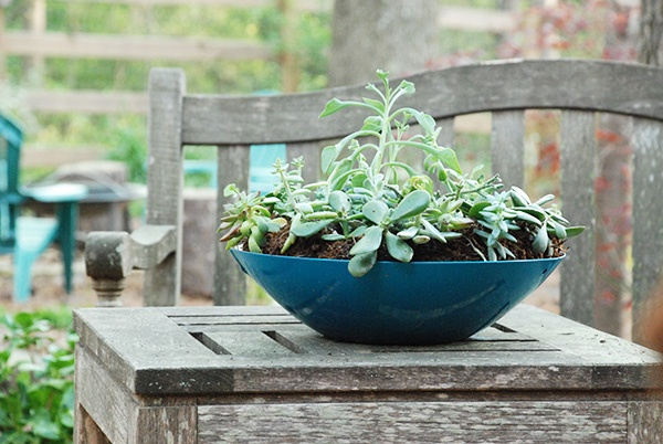 Turn an old wok into a container garden with this how-to from Whitney of The Curtis Casa! #repurposed