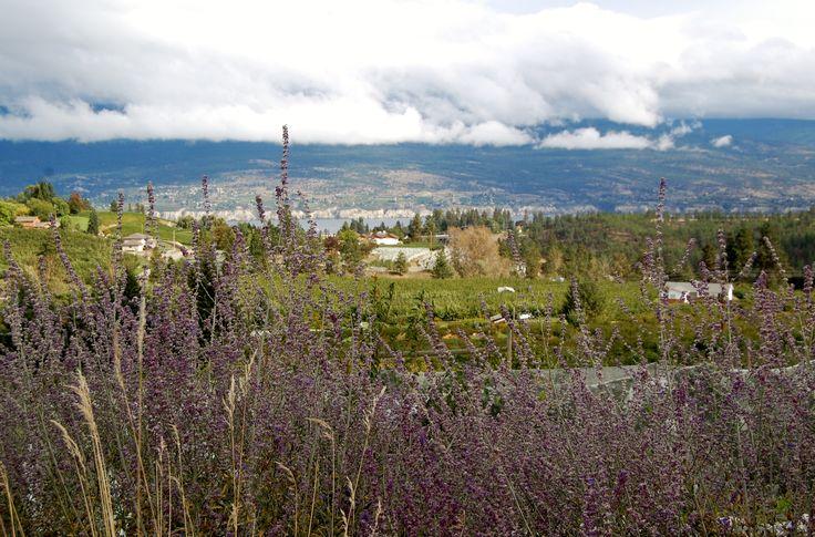 Lavender, vineyards, and Okanagan Lake.
