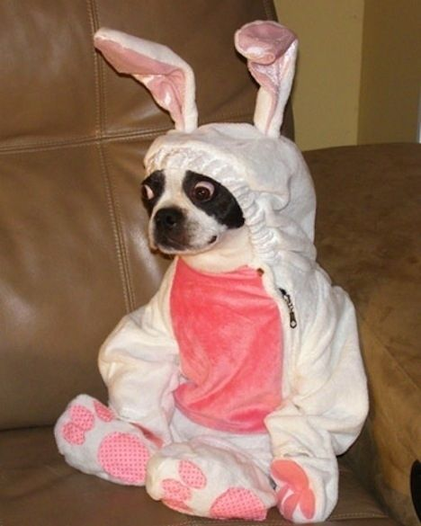 This surprised dog who is actually not a dog at all but is, in fact, a rabbit. | The 31 Most WTF Pictures Of Dogs Being Dogs