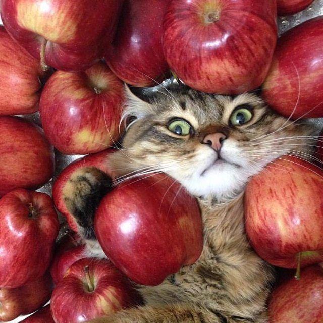 картинки котики с фруктами републикация фото