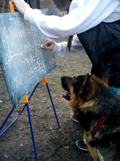 Matematica de părătar ( Lecţia de trigonometrie) | lt.mala