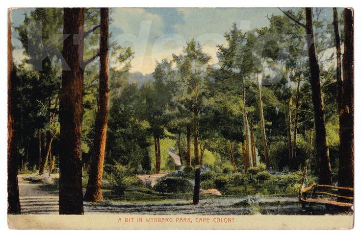 A bit of Wynberg Park, Cape Colony, South Africa. Vintage postcard from the Spes Bona Series, Cape Town.