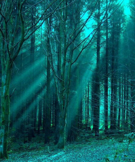 mysterious blue green forest..