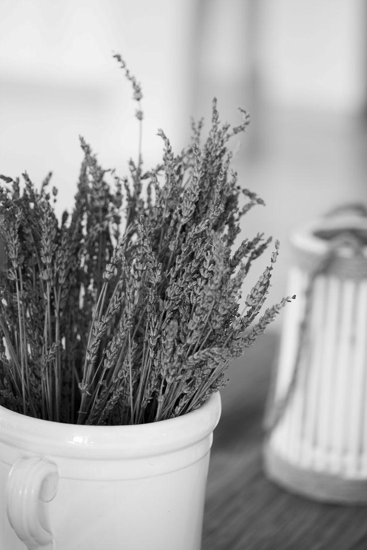 Fiori, profumi: nutrimento di vita