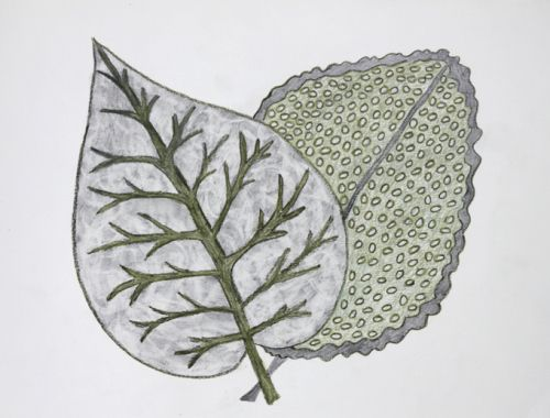 Two leaves together 6 - Judy Oakenfull