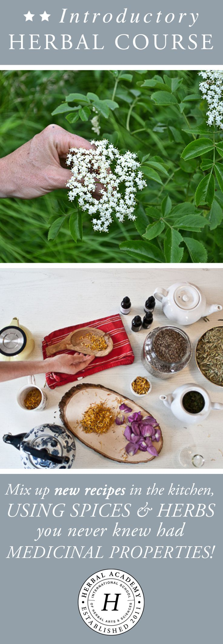 Have you ever wanted to study herbalism? The Herbal Academy's Introductory Herbal Course offers an affordable and convenient online self-paced program that give students with little or no herbal experience a glimpse into the world of herbs. Learn herbal basics including how to make remedies with plenty of awesome recipes, properties of herbs, plants to wildcraft, and so much more!
