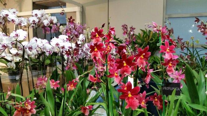 Orticolario 2014 #orchids