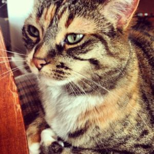 Wanted: Missing calico tabby cat timber lea Watch | Share | Print | Report Ad    View larger image   Date Listed 11-Jul-13 Price Please contact Address Fort McMurray, AB T9K 2N2, Canada  View map If you see this cat or know of anything please give me a call. 306 491 0116 or 780 747 6764 This ad was posted with the http://info.kijiji.ca/ios .
