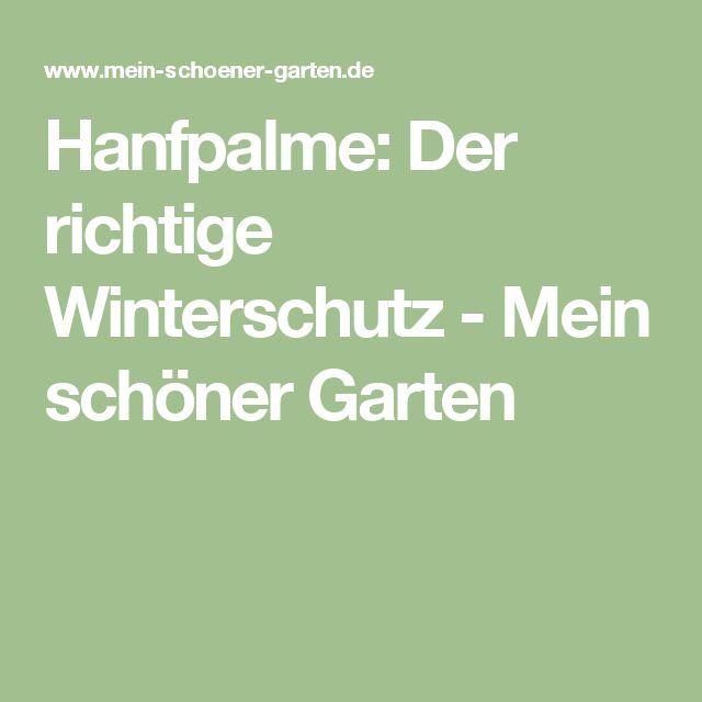 Hanfpalme: Der richtige Winterschutz - Mein schöner Garten