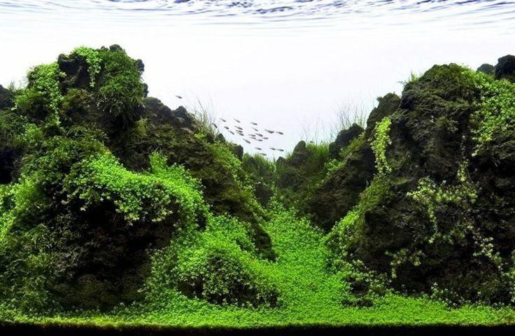 Aquarium einrichten Pflanzen Ideen