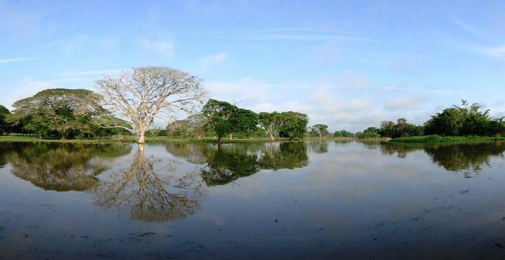 Humedal Patico - En Puerto Nare - Tomado de Antioquia de Aventura
