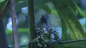 Resultado de imagen para nido colibri