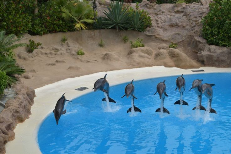 Dolphins at Loro Parque
