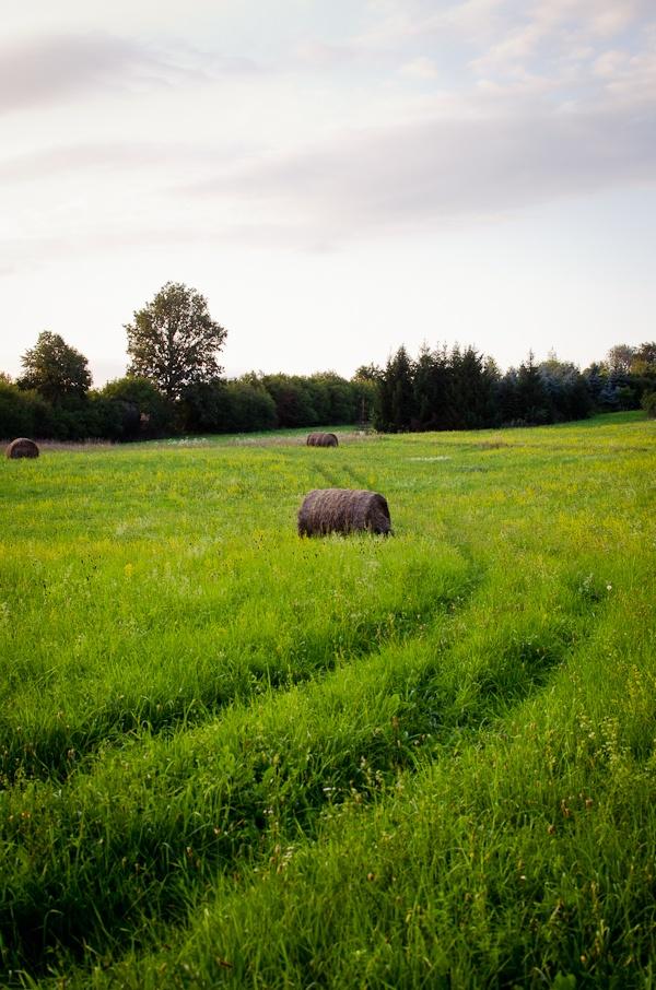 © 2012 Viviane Perenyi - Őrség Meadow Hungary