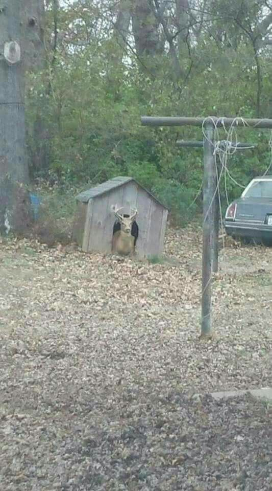 Oh, deer...in the doghouse?
