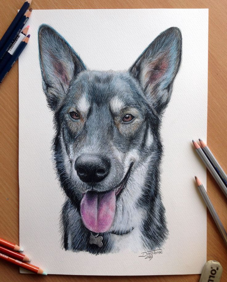 Pencil drawing of a Dog by AtomiccircuS.deviantart.com on @deviantART