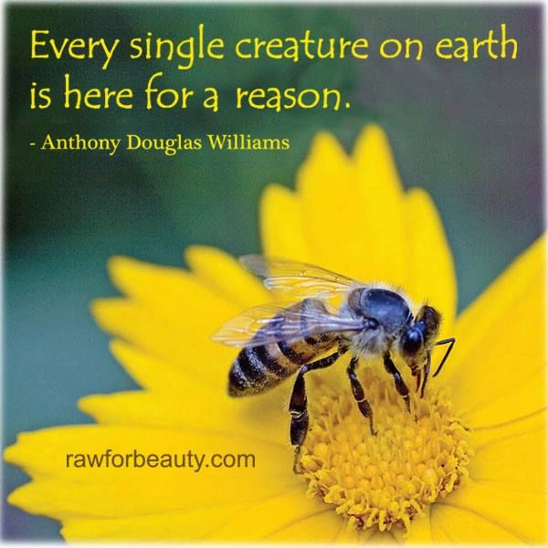 Quotes In The Secret Life Of Bees: 17 Best Images About Bee Quotes On Pinterest