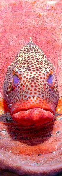 Technical Support | Sealife Cameras