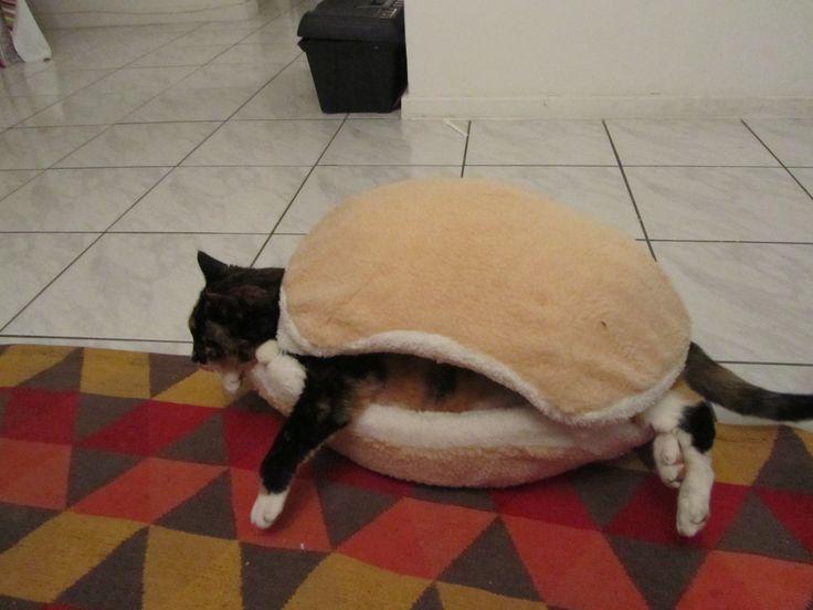 Cat burger 11