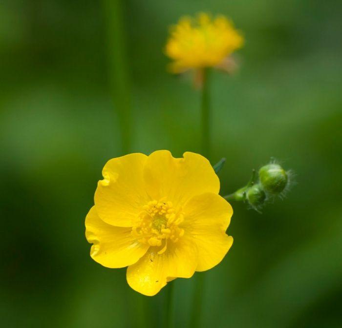 frühlingsblumen bilder frühjahrsblumen pflanzenideen