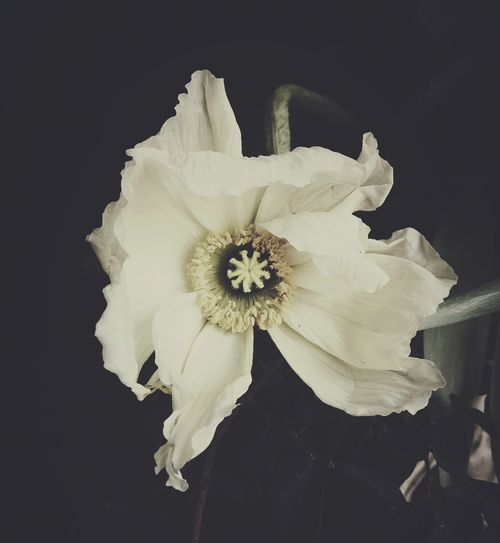 REST - Ashley Woodson Bailey - florography