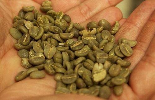 Propiedades del cafe verde