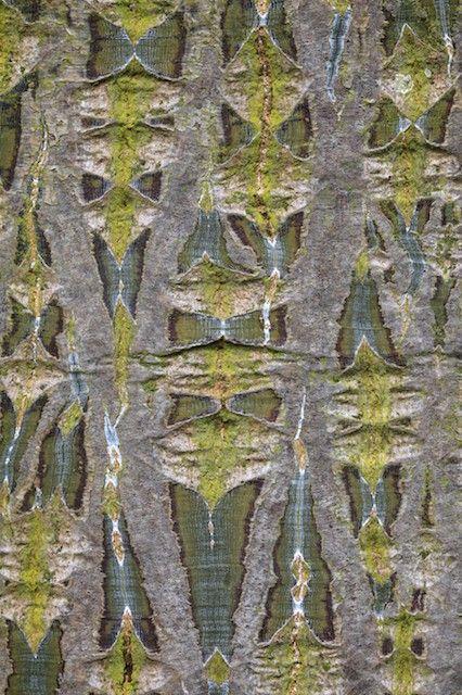 cedric pollet ecorces pinterest arbres et photos. Black Bedroom Furniture Sets. Home Design Ideas