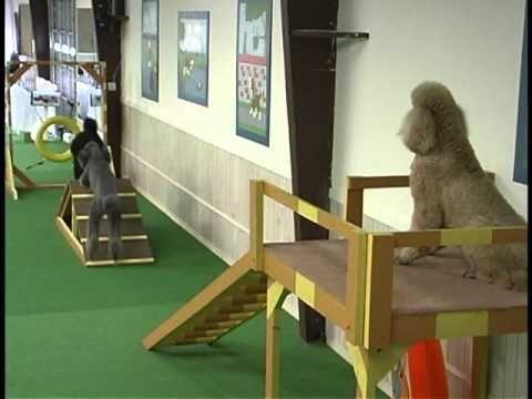 dog indoor obstacle course doggie jungle gym pinterest