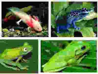 Lingkaran Satwa: 5 Hewan Amfibi Dan Contohnya