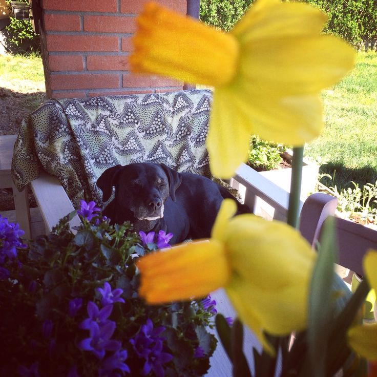Polly&flowers