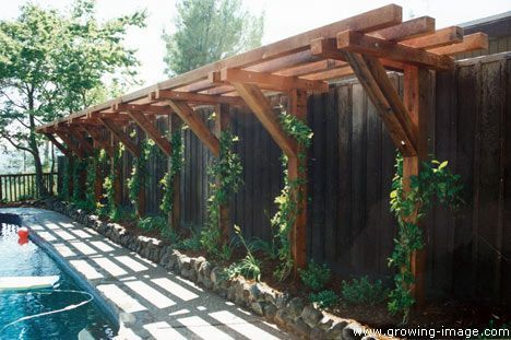 A trellis anchored along the fence. Minus the pool, of course